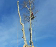 TreeServices-img3
